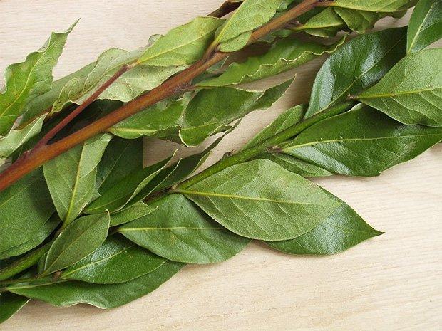 Веточки с зеленым лавровым листом
