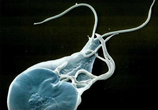 Как связаны гельминты и псориаз